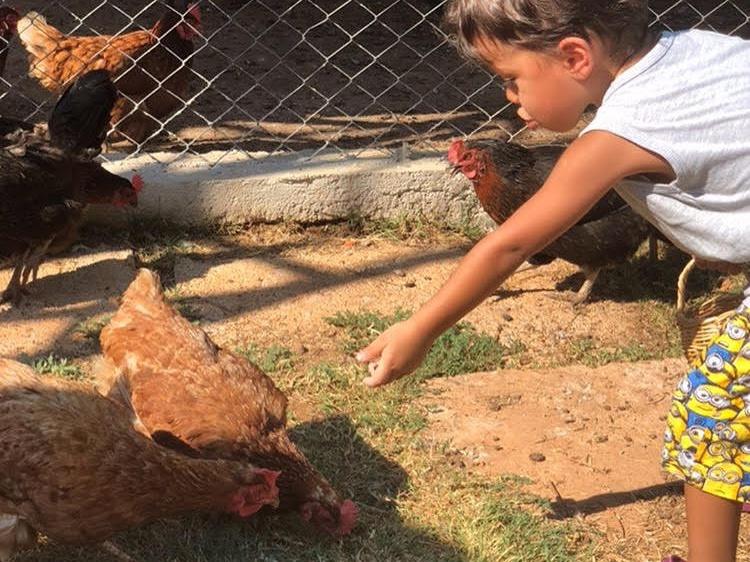 Çocuklara çiftlik hayatı yaşatan okul...