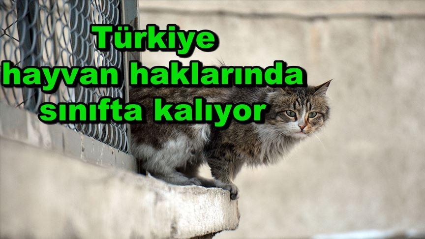 Türkiye hayvan haklarında sınıfta kalıyor
