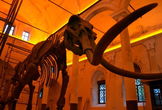 5 milyon yıllık fosiller sergilenecek