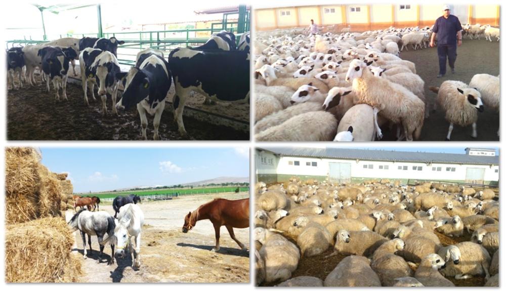 Zootekni 2019 Taban Puanları ve Başarı Sıralamaları