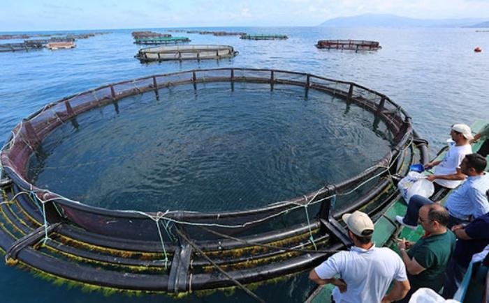 Su Ürünleri Mühendisliği 2019 Taban Puanları ve Başarı Sıralamaları