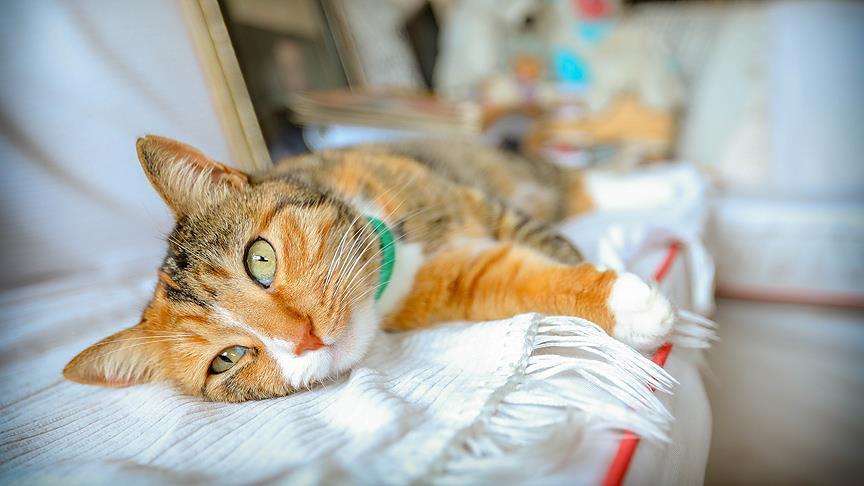 Edebiyatçıların ilhamı ve yoldaşı kediler