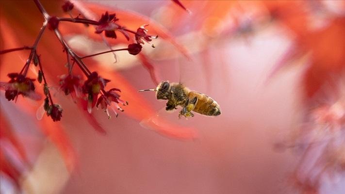 Türkiye'deki tehlike: Arı kayıpları