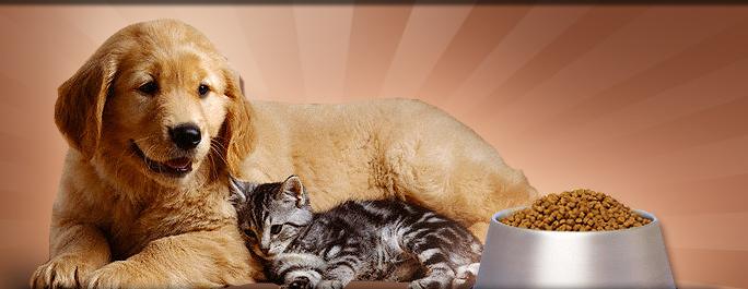 Kedi maması ve köpek maması alırken neler yaptım?