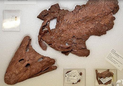 375 milyon yıllık balık fosili sergileniyor