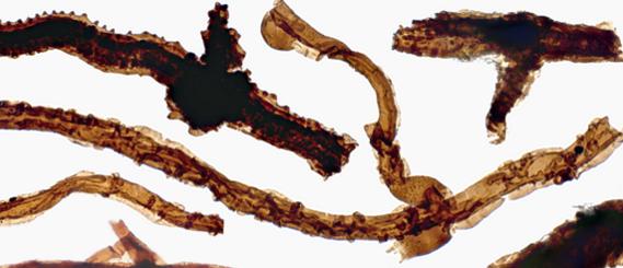 En eski kara canlısı fosili 440 milyon yaşında