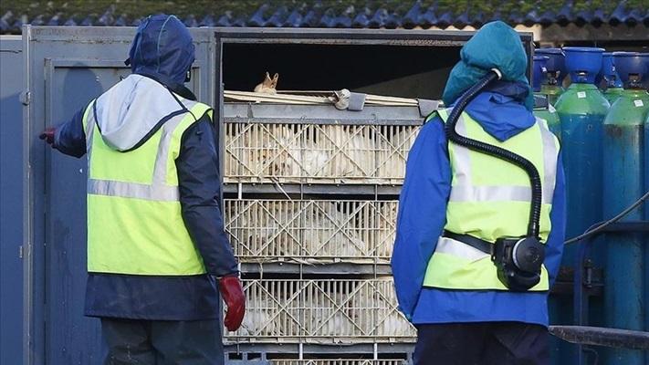 Rus bilim insanları kuş gribinin ilk kez insana bulaşan türünü tespit etti