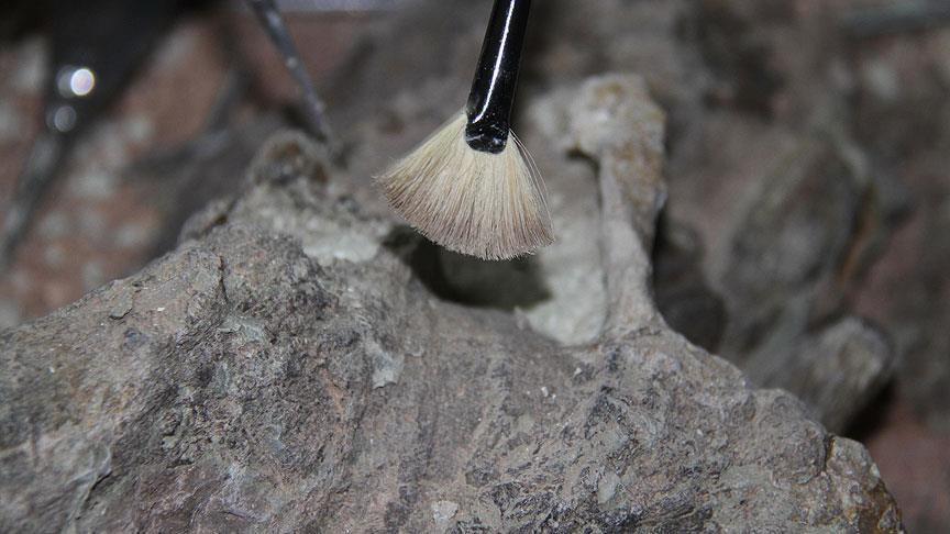 120 milyon yıl öncesinden dinozor kalıntıları bulundu