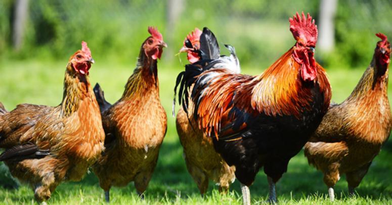 Kanatlı Hayvan Yetiştiriciliği  2019 Taban Puanları ve Başarı Sıralamaları