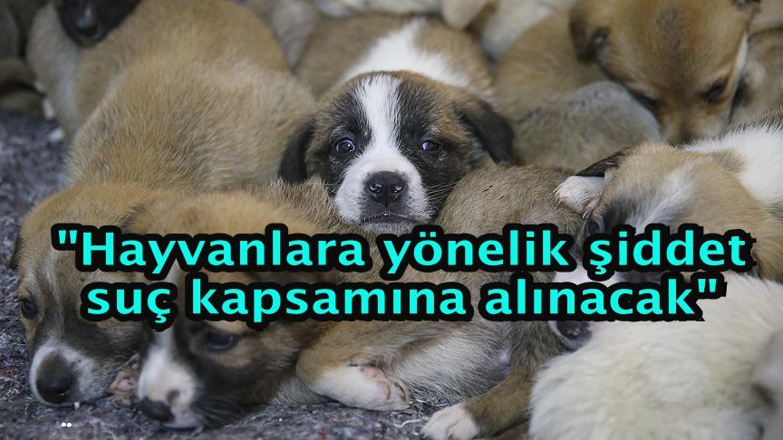 """Bakan Pakdemirli: """"Hayvanlara yönelik şiddet suç kapsamına alınacak"""""""
