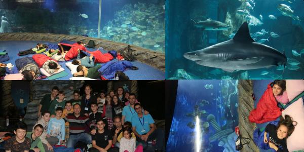 Darüşşafakalı Gençler Köpekbalıkları için Nöbet Tuttu!