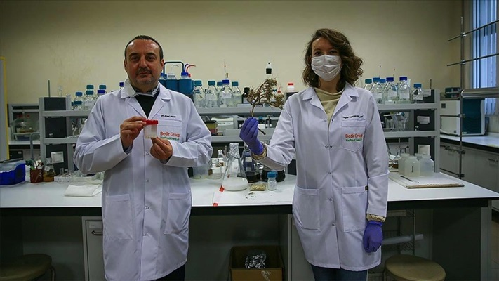 Geven otundan elde edilen molekül kanserle savaşacak