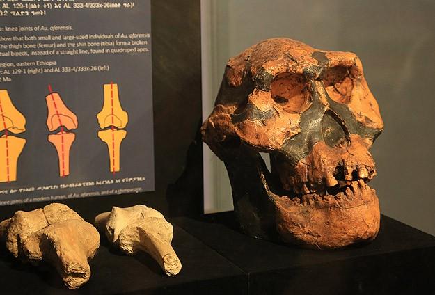 Etiyopya'da 3,2 milyon yıllık insansı fosil: Lucy