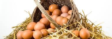 Protein Değeri Yüksek Köy Yumurtası