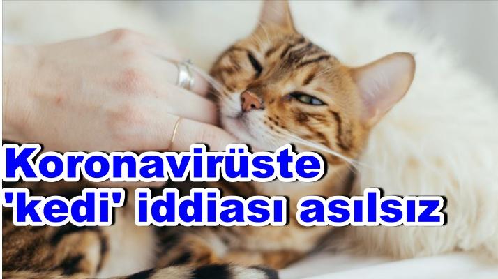 Koronavirüste 'kedi' iddiası asılsız