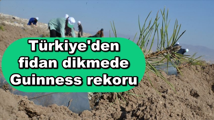 Türkiye'den fidan dikmede Guinness rekoru