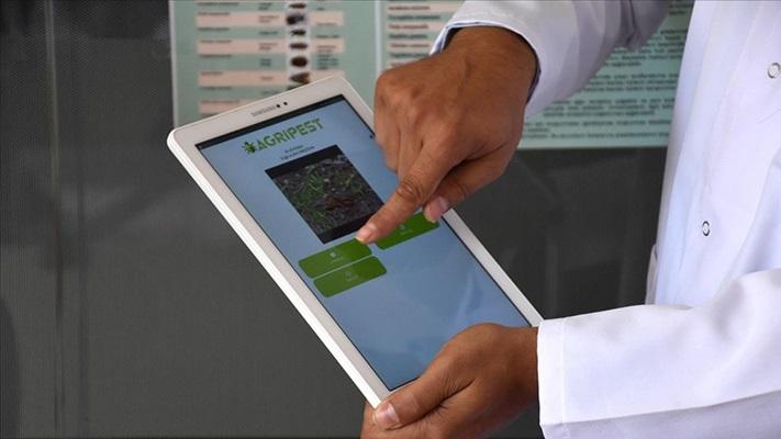 Meslek lisesinde geliştirilen telefon uygulamasıyla tarım zararlıları tespit ediliyor