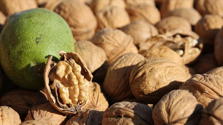 'Ceviz artık bir meyveden çok sağlık için kullanılan tablettir'