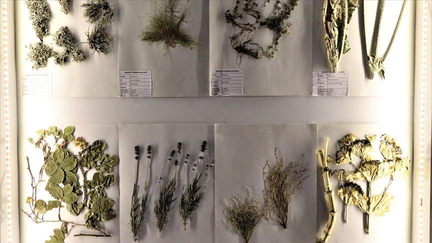 Türkiye'nin 'sucul canlıları' bu müzede incelenecek