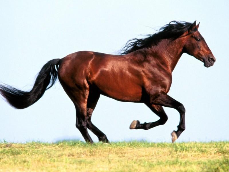 Terapilerde neden at kullanılıyor?