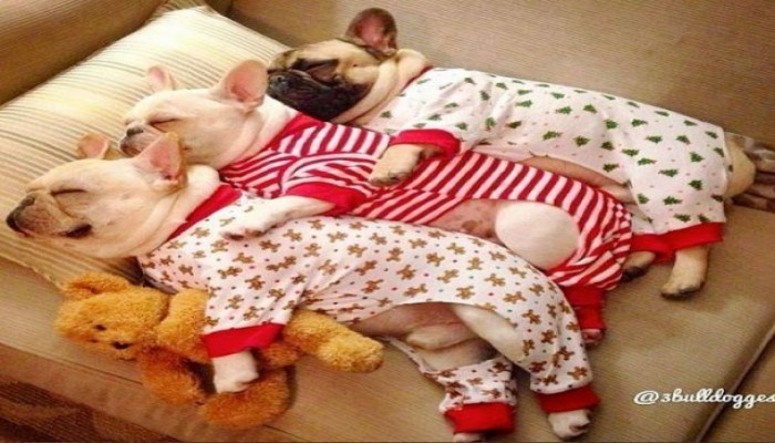 Yılın En Uykucuları...