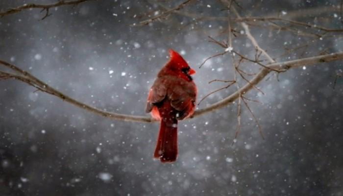 Yılın Hayvan Fotoğrafları