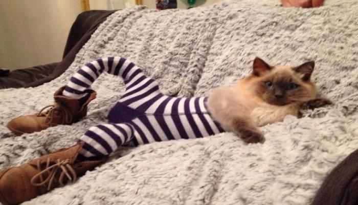 Kediler Tayt Giyerse